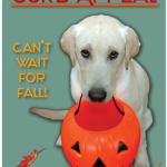 Curb Appeal Fall Catalogue